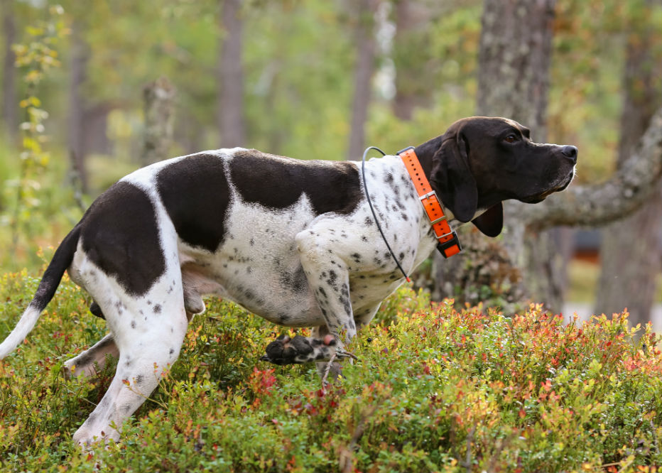 Best Dog GPS Tracker for Your Dog's Perfect Safety